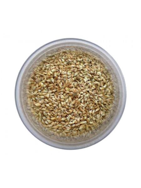 Уцхо-сунели зерно