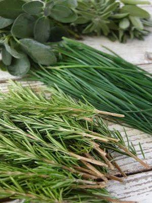 Розмарин, базилик и другие пряные травы
