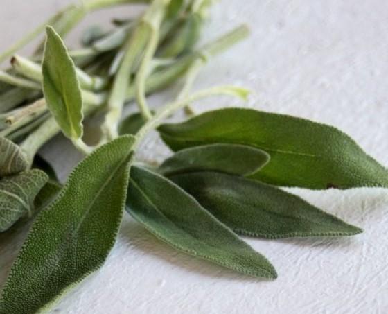 Листья шалфея макросьемка