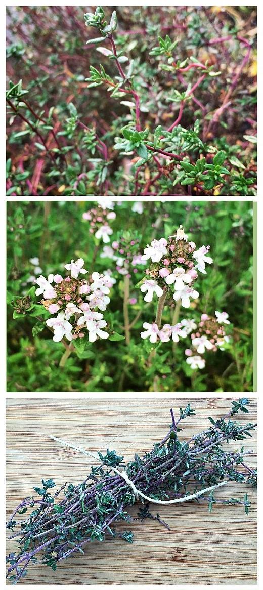 Внешний вид специи Тимьян ((растение, цветы, сушеный)
